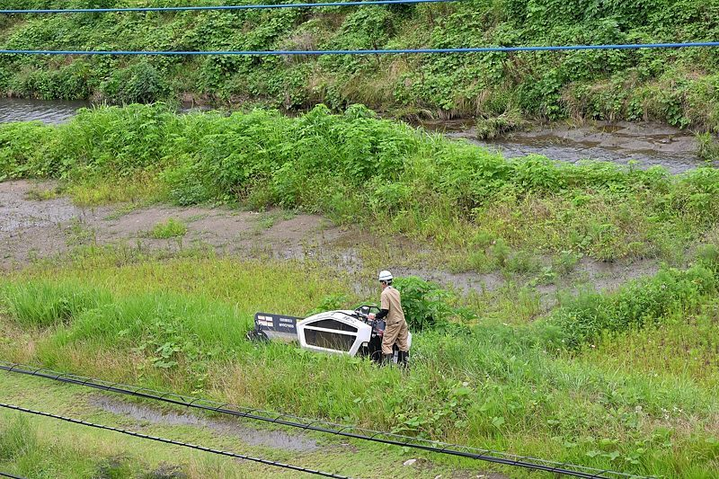 小畔川便り(草刈りの後で-4:周辺の様子:2021/6/28.30)_f0031682_06131167.jpg