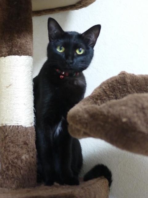 猫のお留守番 てぃかちゃん編。_a0143140_22114904.jpg