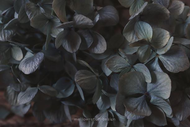 今年も紫陽花のドライフラワーできました。_d0124248_17440358.jpg