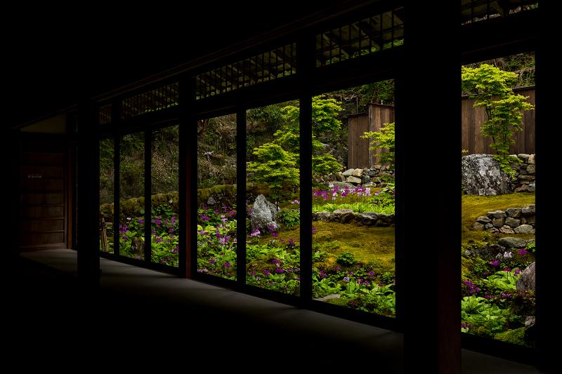 九輪草と春の山野草たち(古知谷阿弥陀寺)_f0155048_21010969.jpg