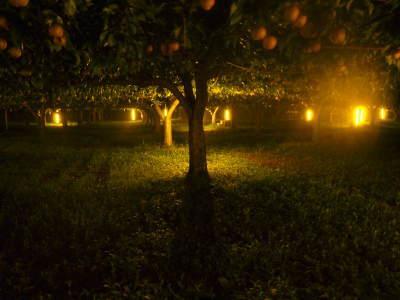 熊本梨 本藤果樹園 今年(令和3年)も元気に育つ梨園の様子!樹上完熟にこだわりお届けします!!_a0254656_17083344.jpg