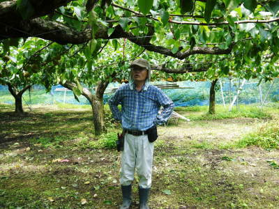 熊本梨 本藤果樹園 今年(令和3年)も元気に育つ梨園の様子!樹上完熟にこだわりお届けします!!_a0254656_17125061.jpg