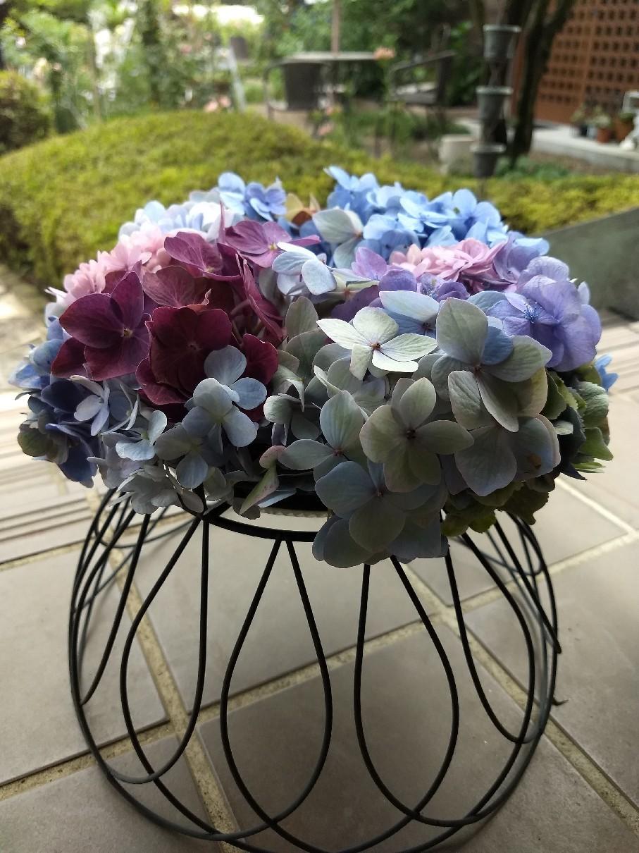 色とりどりの紫陽花を使ったリース作り_e0356469_20454766.jpg