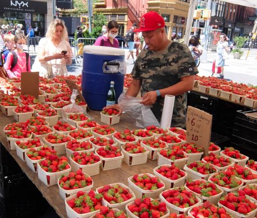 夏のNY、ユニオン・スクエアの青空市場の風景_b0007805_22364149.jpg