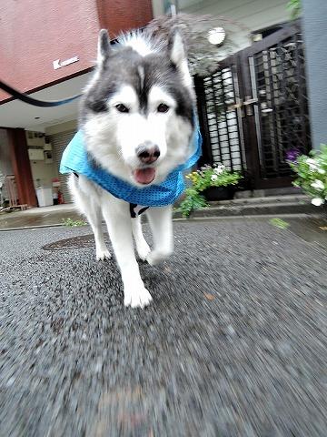 散歩屋日誌【65】_c0062832_15344577.jpg
