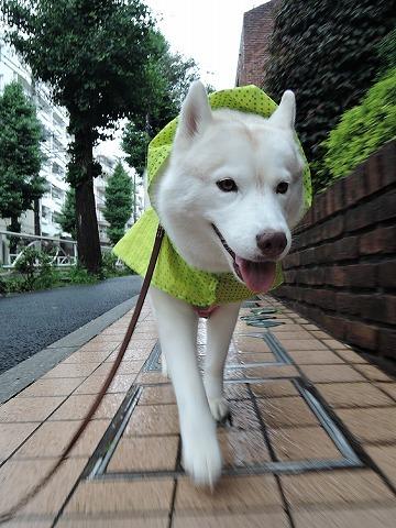 散歩屋日誌【65】_c0062832_15344600.jpg