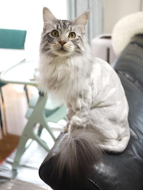 猫のお留守番 レオくん編。_a0143140_22302325.jpg