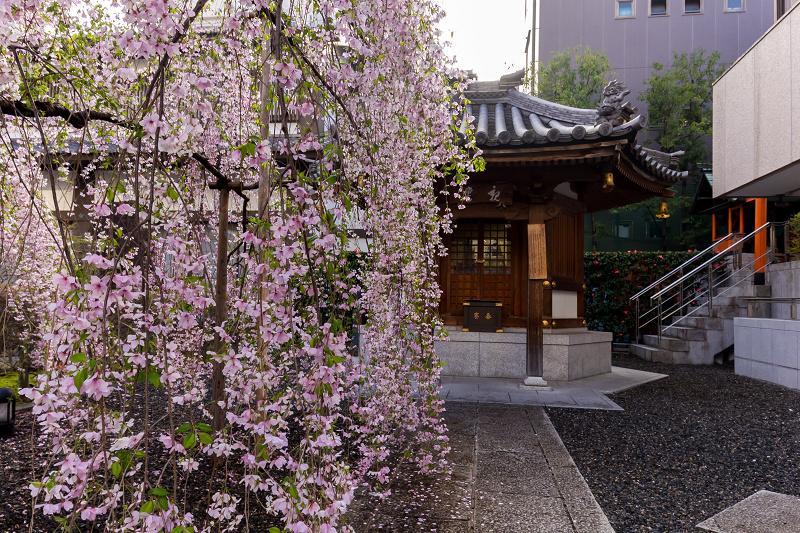 2021桜咲く京都  御幸桜咲く六角堂_f0155048_20202906.jpg