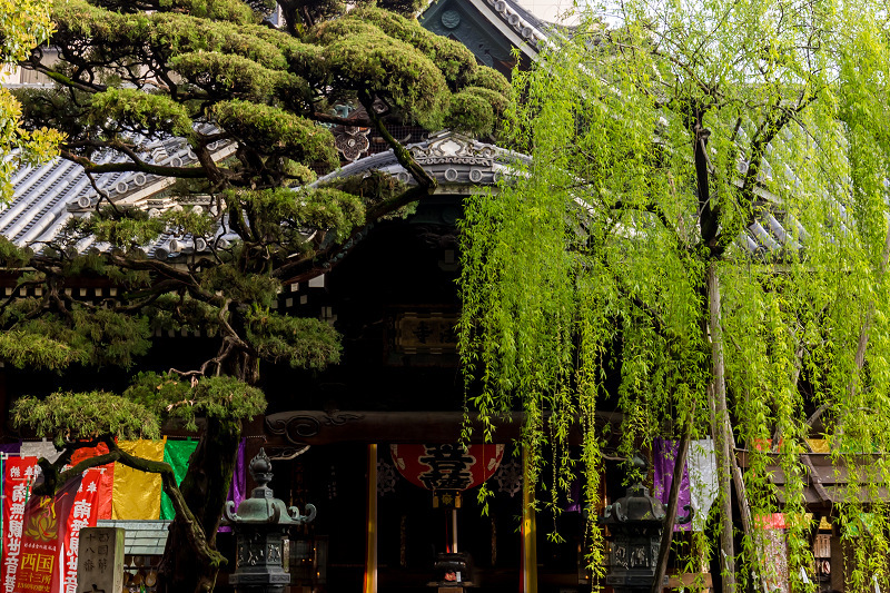 2021桜咲く京都  御幸桜咲く六角堂_f0155048_20203223.jpg