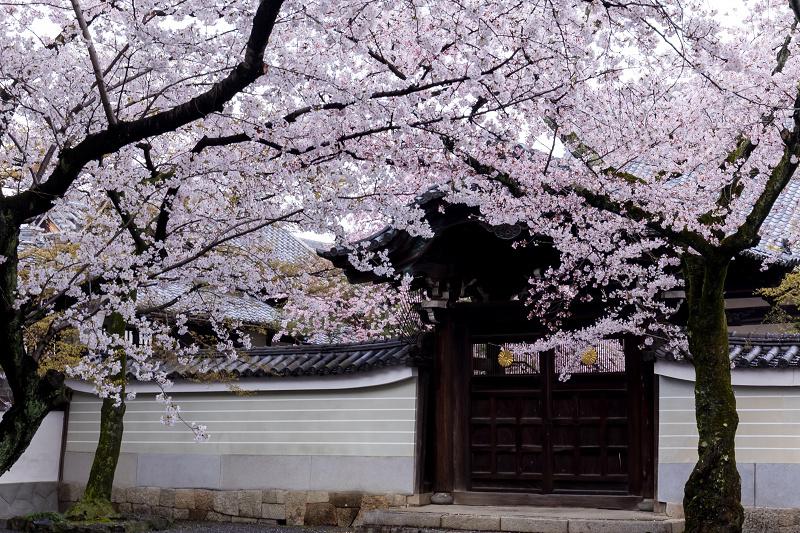 2021桜咲く京都  妙顕寺ライトアップ_f0155048_23333825.jpg