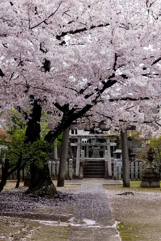 2021桜咲く京都  妙顕寺ライトアップ_f0155048_23340137.jpg