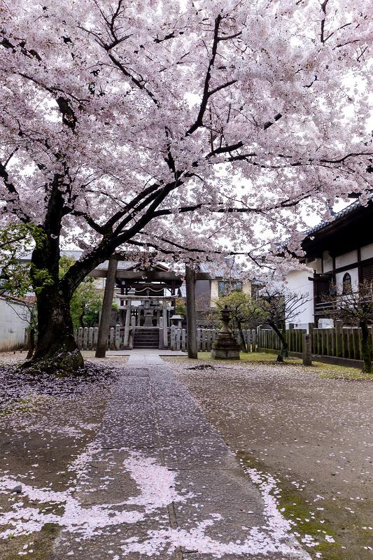 2021桜咲く京都  妙顕寺ライトアップ_f0155048_23344494.jpg