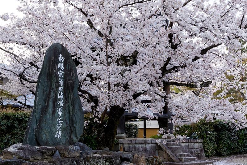 2021桜咲く京都  妙顕寺ライトアップ_f0155048_23345771.jpg