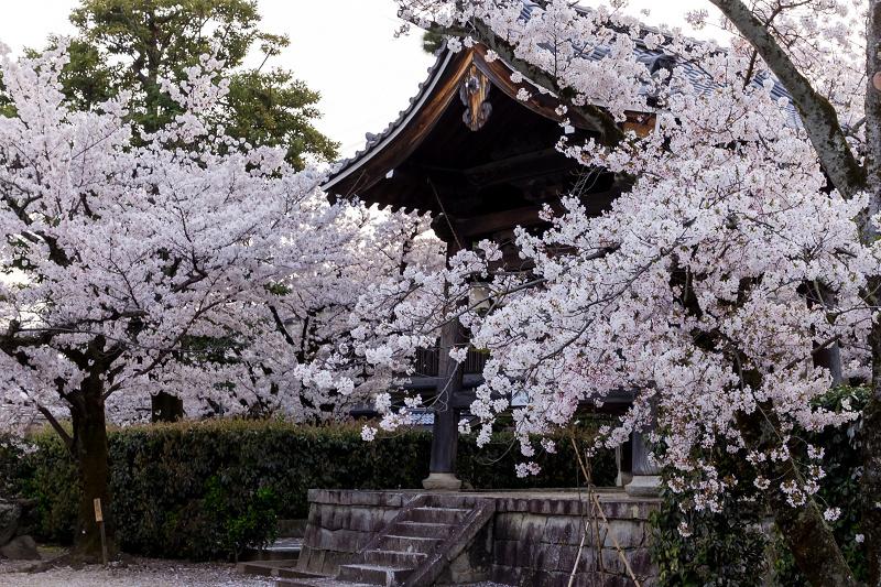 2021桜咲く京都  妙顕寺ライトアップ_f0155048_23350540.jpg