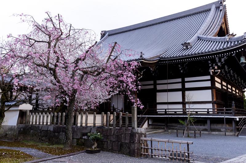 2021桜咲く京都  妙顕寺ライトアップ_f0155048_23352539.jpg