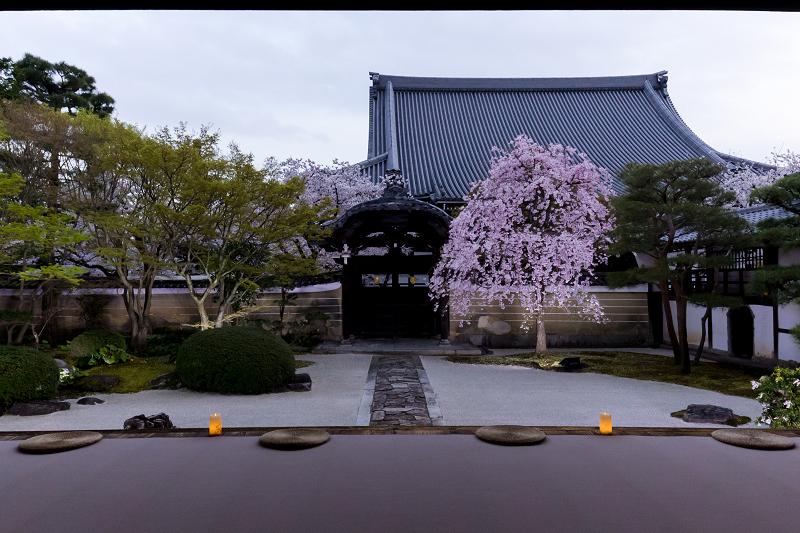 2021桜咲く京都  妙顕寺ライトアップ_f0155048_23360601.jpg