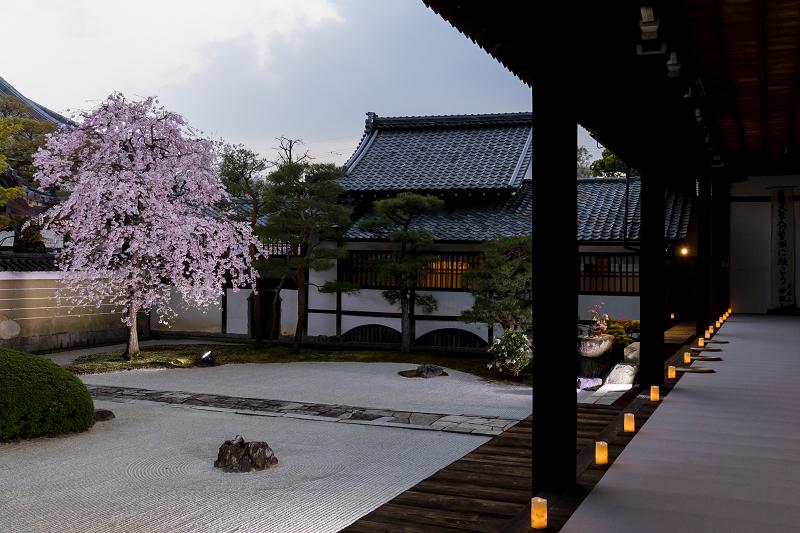 2021桜咲く京都  妙顕寺ライトアップ_f0155048_23373646.jpg