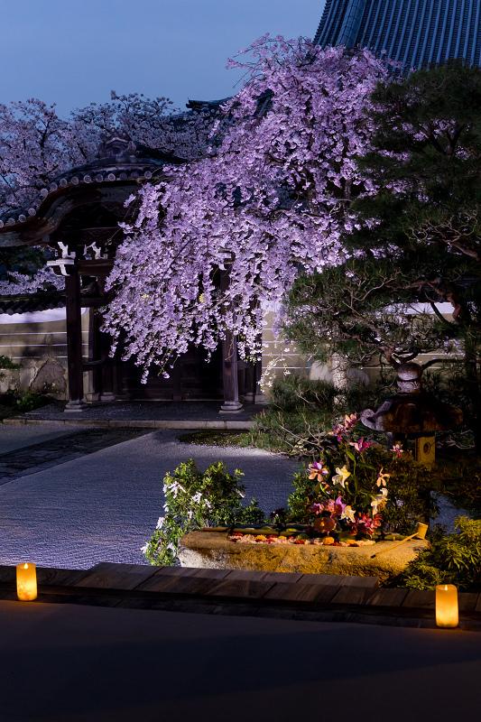2021桜咲く京都  妙顕寺ライトアップ_f0155048_23381237.jpg