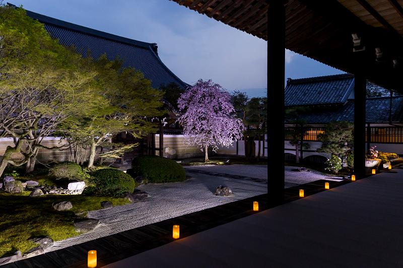 2021桜咲く京都  妙顕寺ライトアップ_f0155048_23391966.jpg