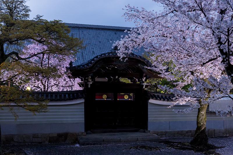 2021桜咲く京都  妙顕寺ライトアップ_f0155048_23395257.jpg