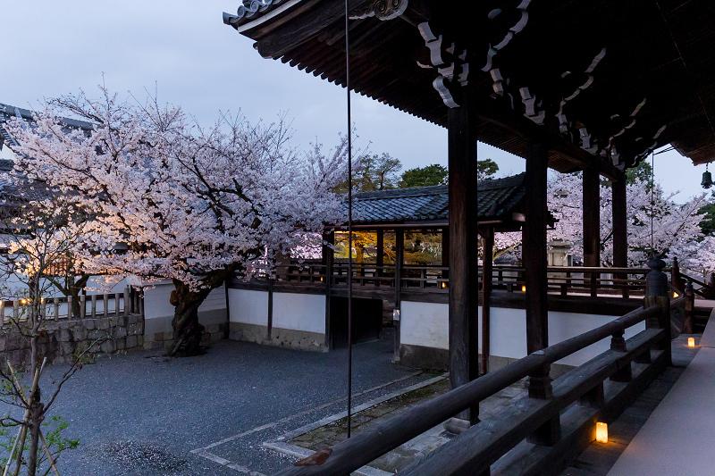 2021桜咲く京都  妙顕寺ライトアップ_f0155048_23395506.jpg