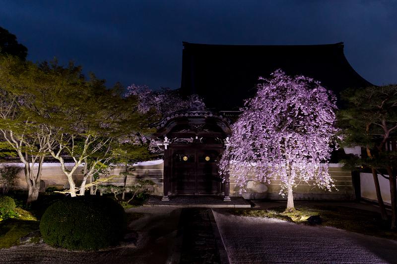 2021桜咲く京都  妙顕寺ライトアップ_f0155048_23402876.jpg