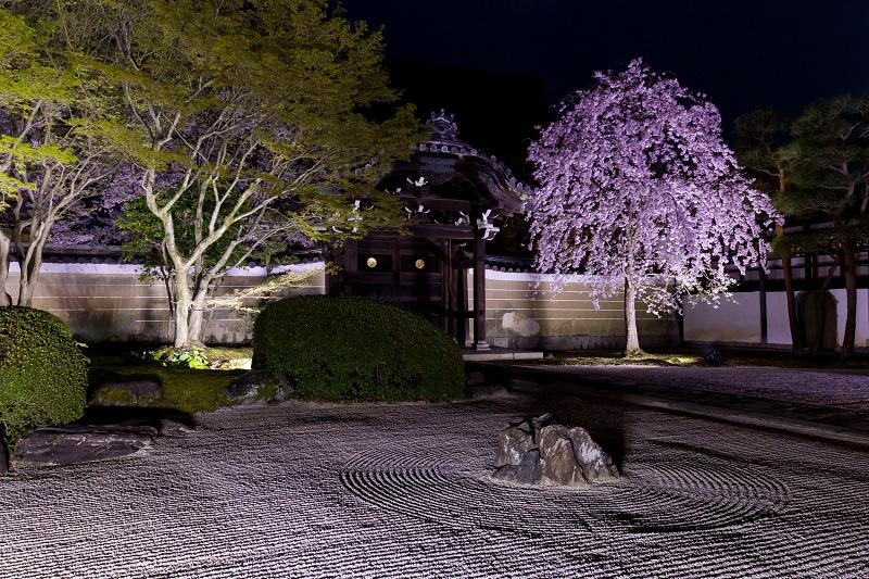 2021桜咲く京都  妙顕寺ライトアップ_f0155048_23404935.jpg