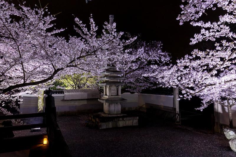 2021桜咲く京都  妙顕寺ライトアップ_f0155048_23411731.jpg