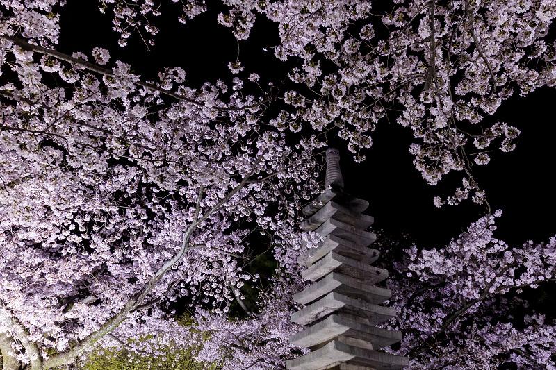 2021桜咲く京都  妙顕寺ライトアップ_f0155048_23412141.jpg