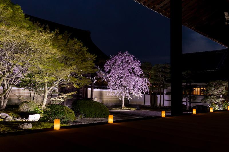 2021桜咲く京都  妙顕寺ライトアップ_f0155048_23420335.jpg