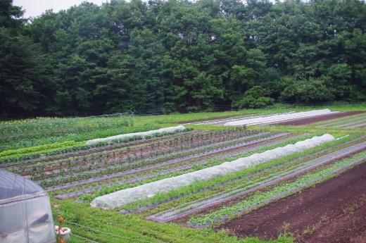 梅雨が明けそうな畑_c0110869_12302052.jpg