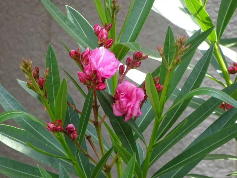 庭の花 R3.6月その5_f0059673_11253497.jpg