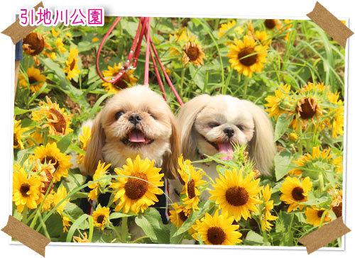 2021年7月11日 引地川公園_b0024183_17455021.jpg