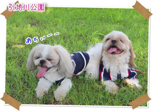 2021年7月11日 引地川公園_b0024183_17455027.jpg