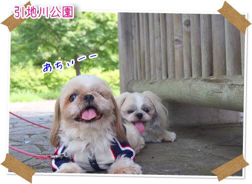 2021年7月11日 引地川公園_b0024183_17455035.jpg