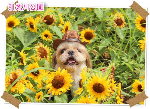 2021年7月11日 引地川公園_b0024183_17455082.jpg