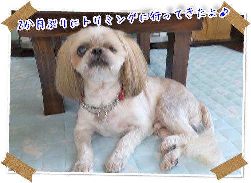 2021年7月11日 引地川公園_b0024183_17455175.jpg