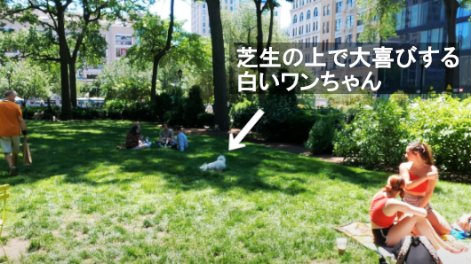 NY、ユニオン・スクエアのホノボノ風景_b0007805_20513431.jpg
