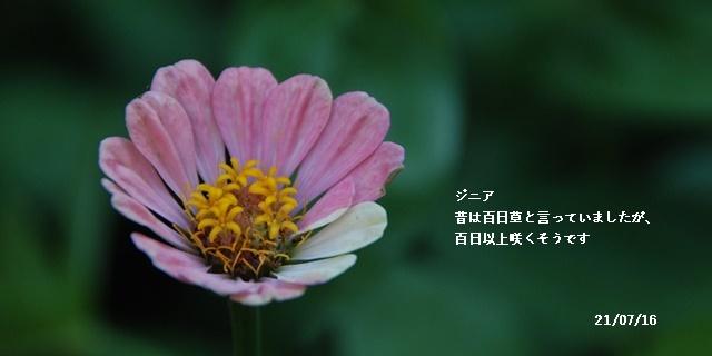 梅雨明け_c0051105_20590498.jpg