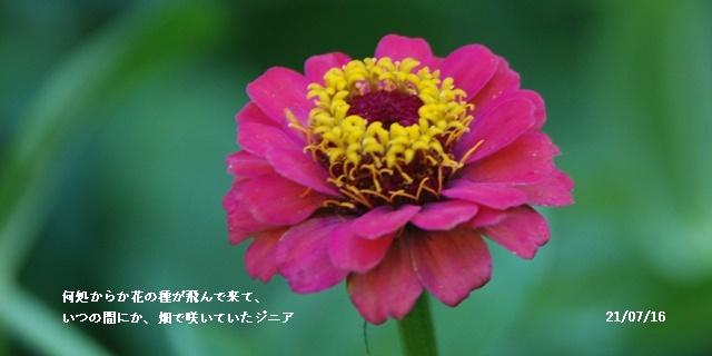 梅雨明け_c0051105_20592557.jpg