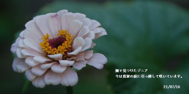 梅雨明け_c0051105_21013838.jpg
