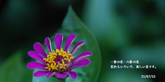 梅雨明け_c0051105_21381999.jpg