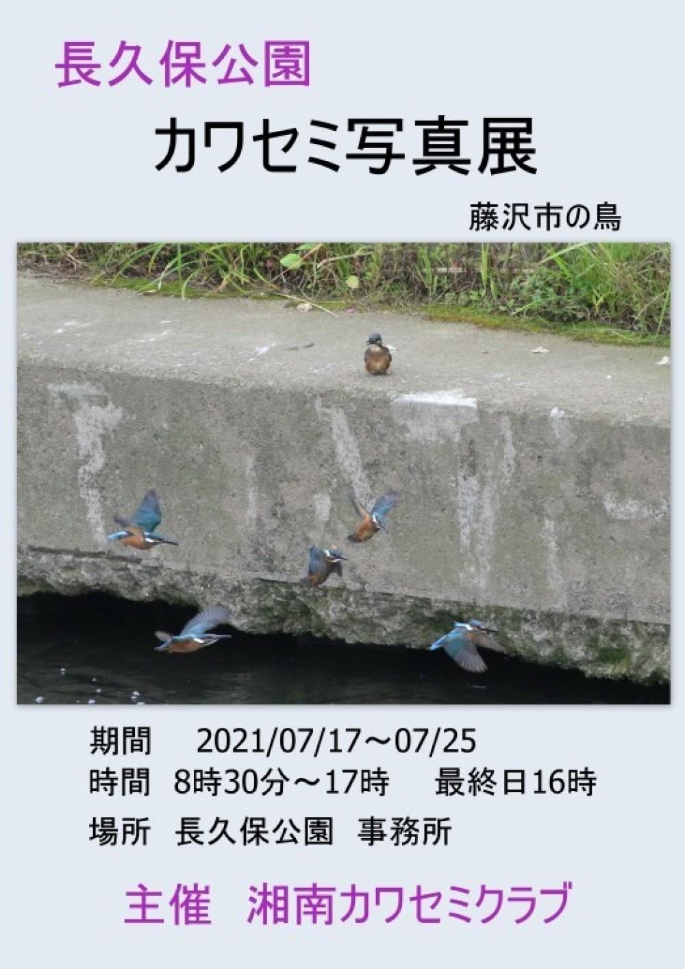 長久保公園 カワセミ写真展 7/16_f0281533_07255730.jpg