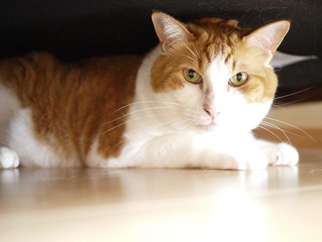 猫のお留守番 あずきくん編。_a0143140_22251817.jpg