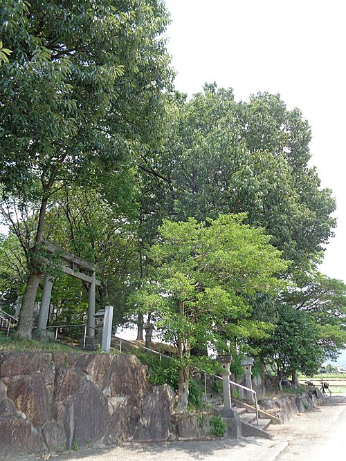 須賀神社 社叢_e0066586_07414160.jpg