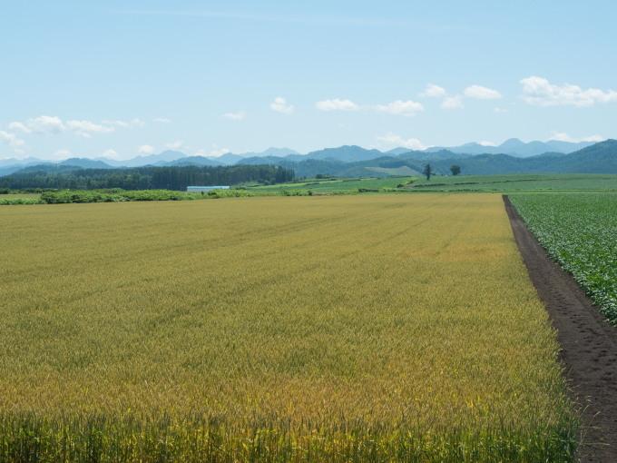 """小麦色づく夏本番・・今シーズンはじめての""""なつぞら""""?_f0276498_22003985.jpg"""