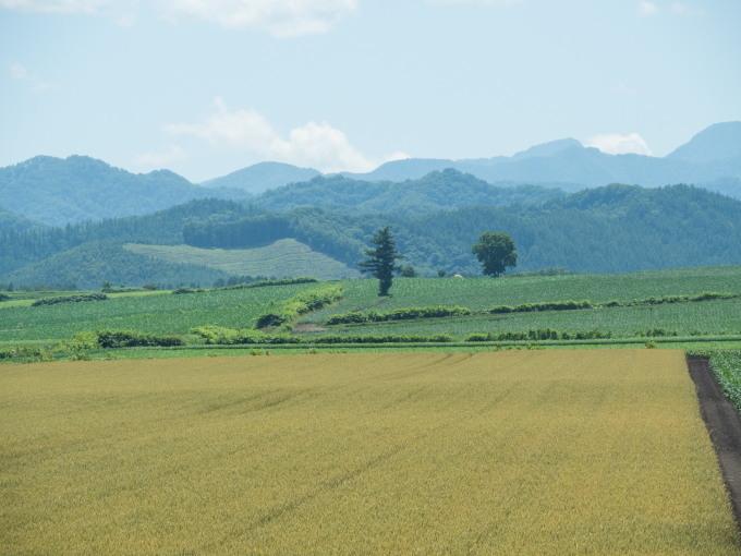 """小麦色づく夏本番・・今シーズンはじめての""""なつぞら""""?_f0276498_22011223.jpg"""