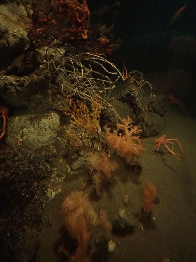 南極の海~卵を守るプランダーフィッシュ、深海の生物~漂うタチウオ(葛西臨海水族園)_b0355317_13075316.jpg