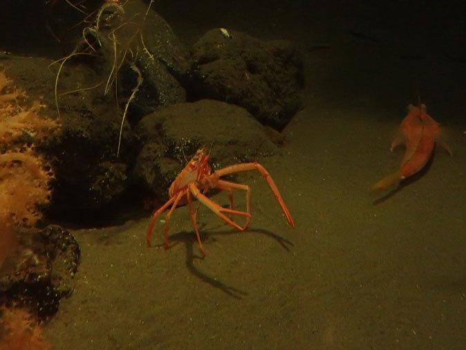 南極の海~卵を守るプランダーフィッシュ、深海の生物~漂うタチウオ(葛西臨海水族園)_b0355317_13095633.jpg