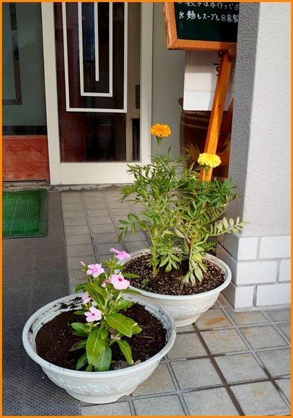 不摂生な店主たちが花を愛でてみた夏の巻_a0041925_22063440.jpg